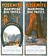 Yosemite. Mariposa Big Trees. …